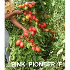 "Tomate Roz ""PINK PIONEER F1"""