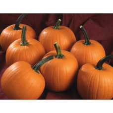 "dovleac Halloween ""Terrafin F1"""