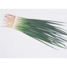 """Ceapa """"TOTEM F1""""( Allium Fistulosum )"""